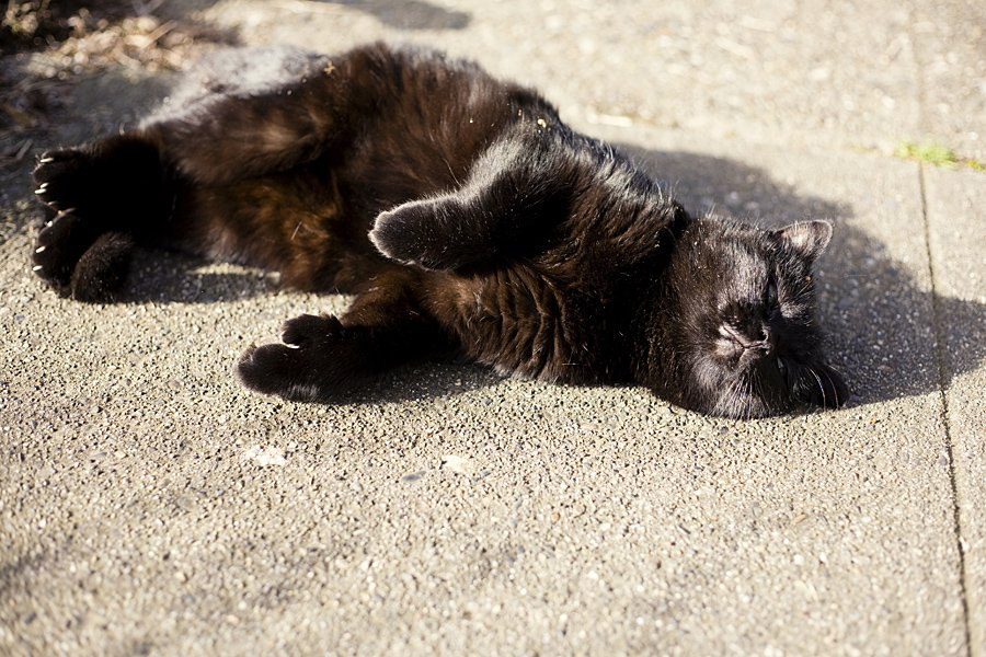 Sleeping in the sunshine