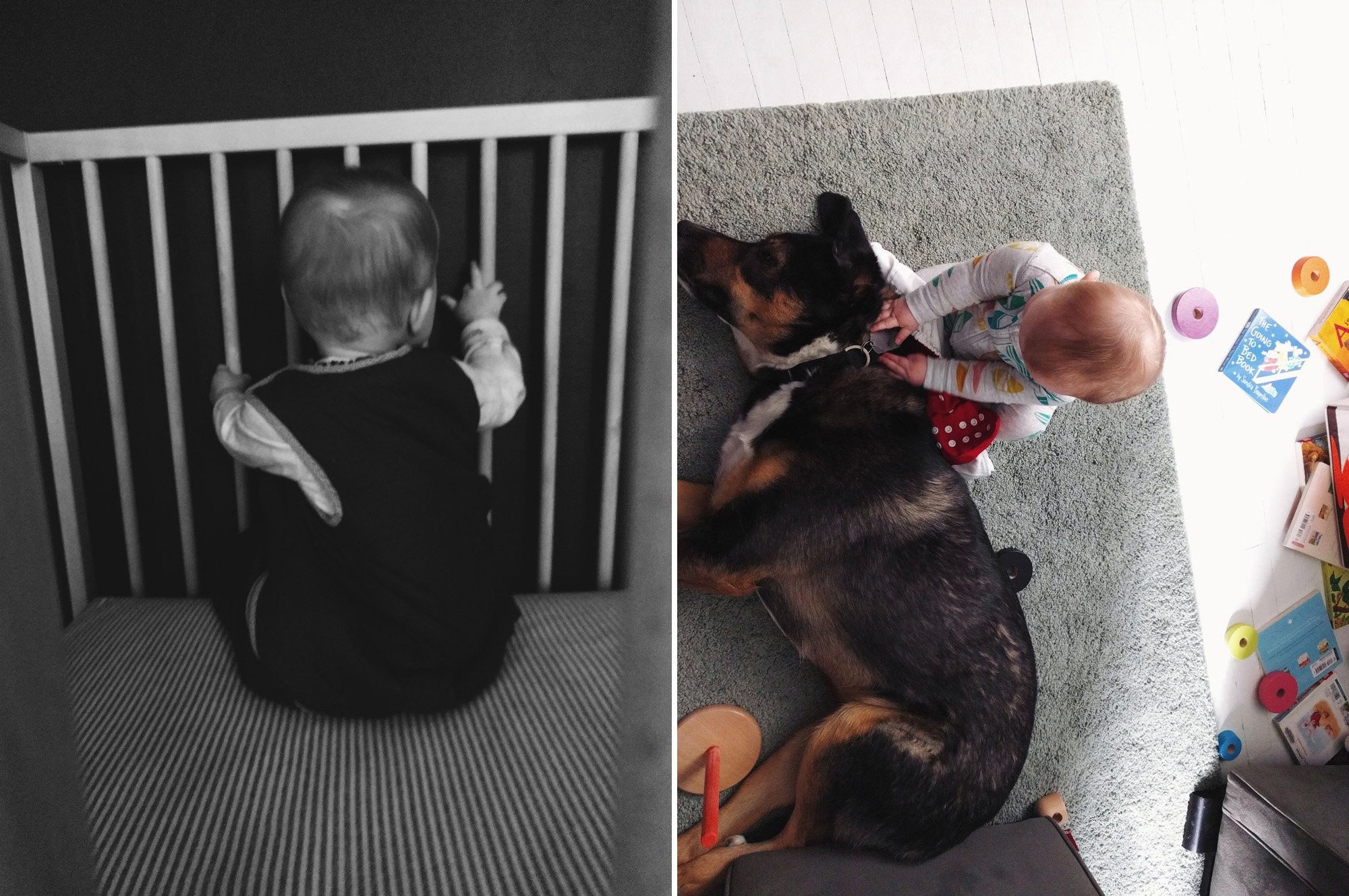 Babies and dogs // Emily Wenzel Photography