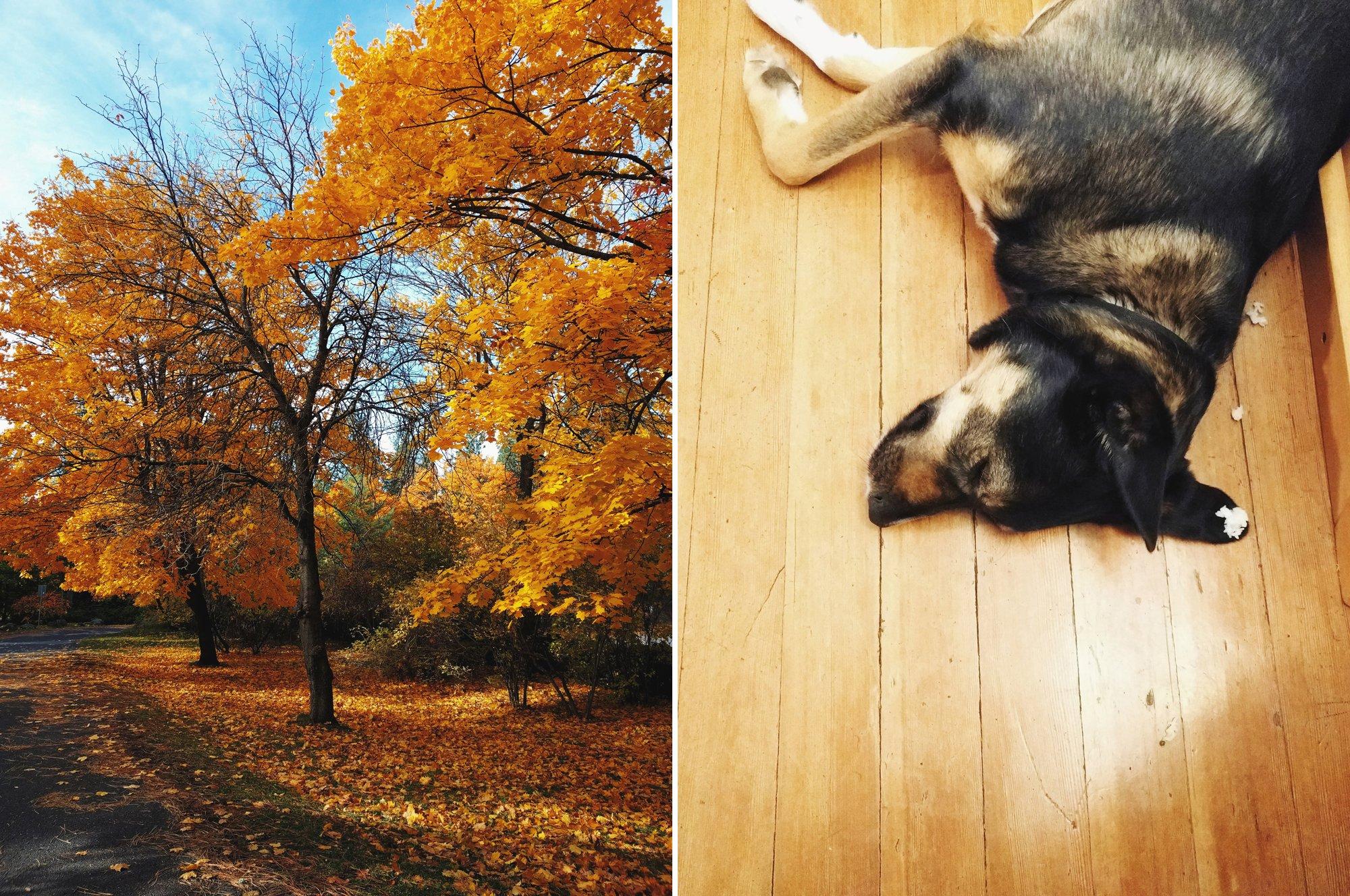 Fall at Manito in Spokane