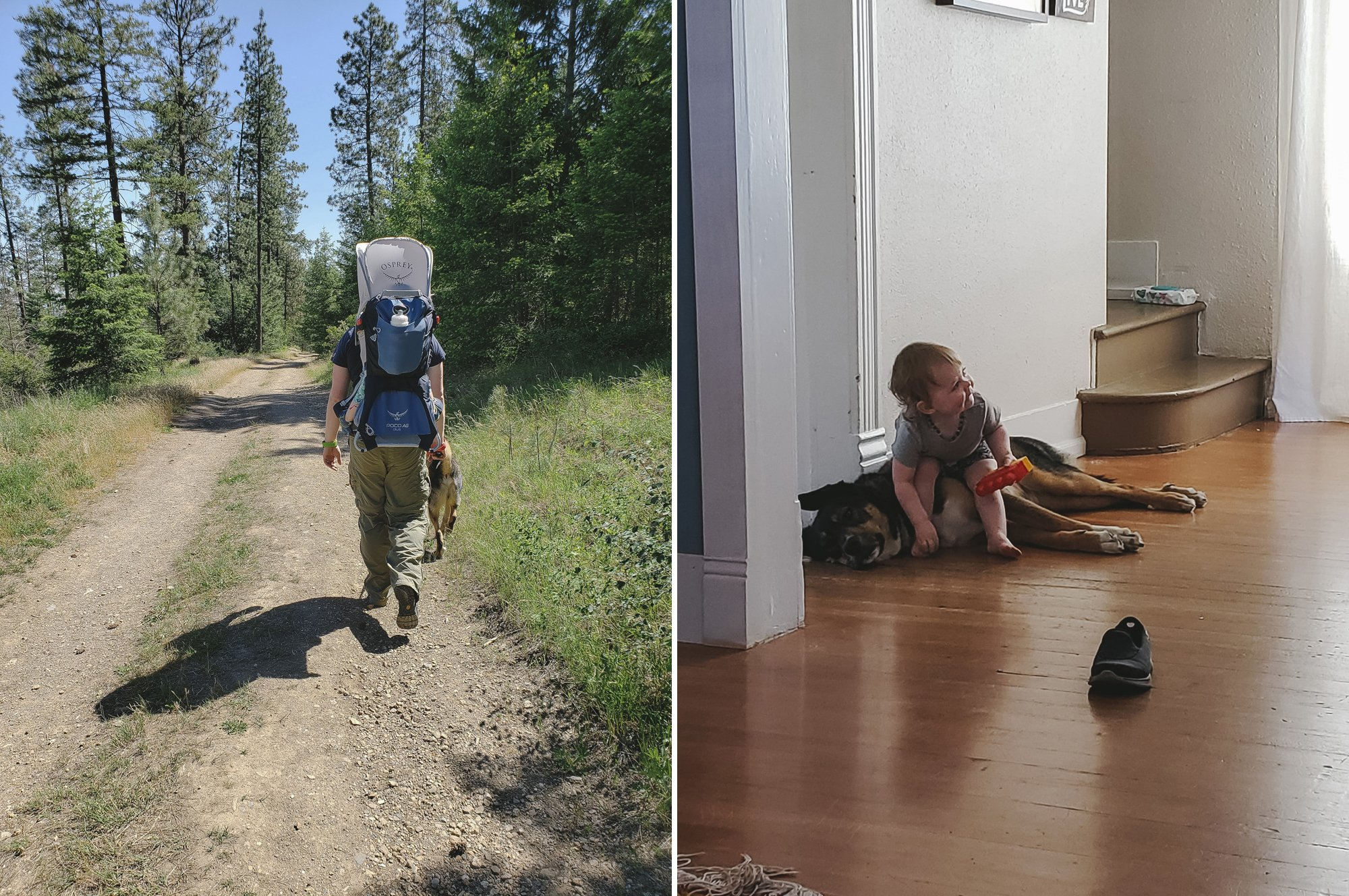 Hiking in Post Falls with Dogs and Babies // Spokane with kids