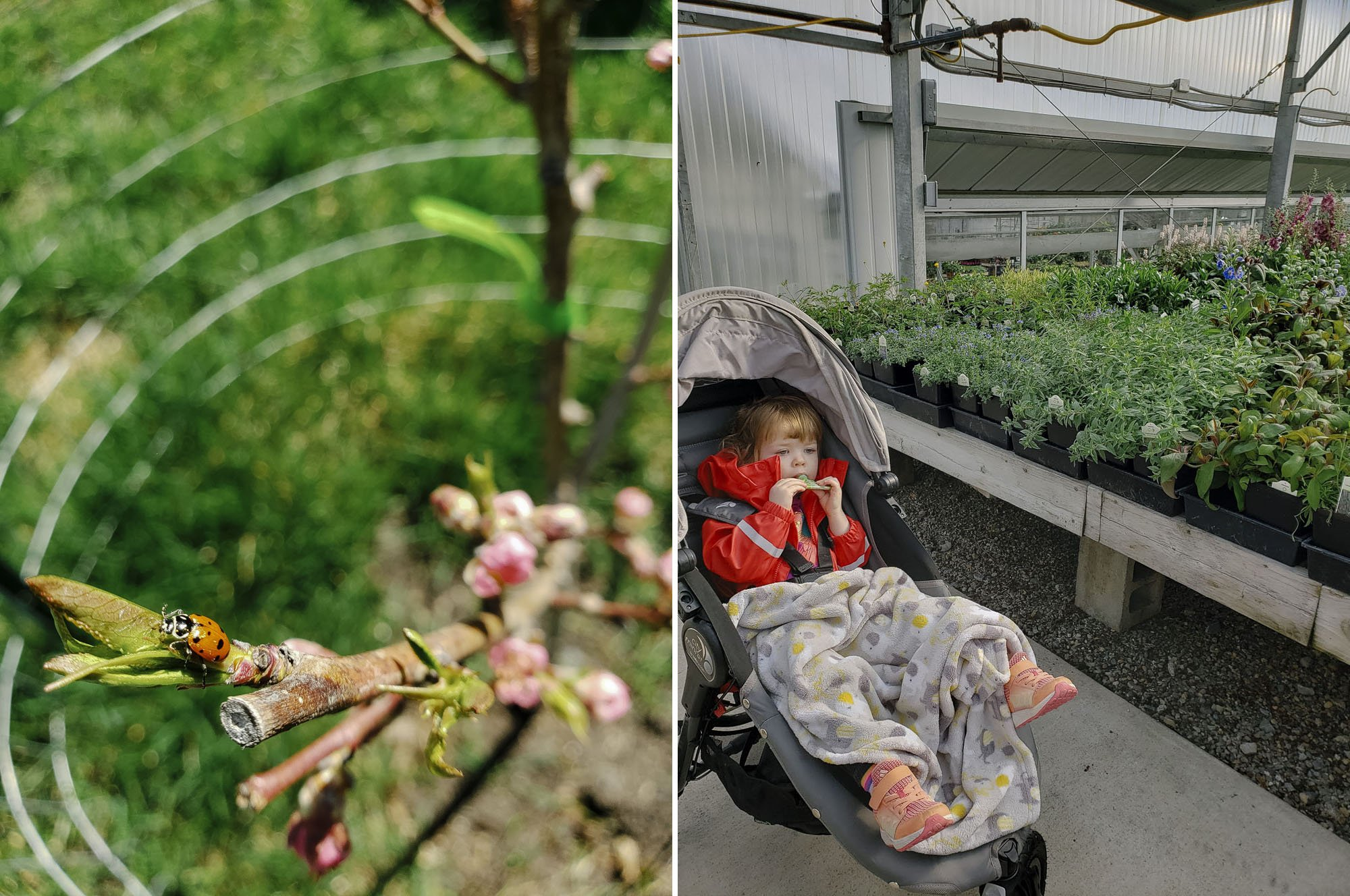 Urban gardening // Liberty Park Florist