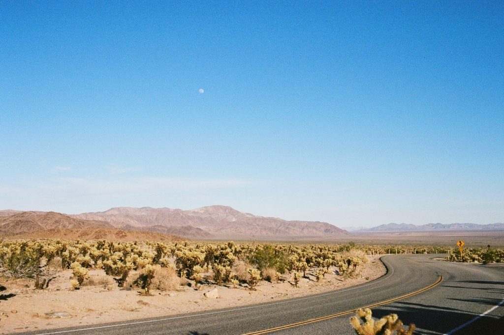 Joshua Tree National Park - Moon in the blue sky above a curving road with a road curves ahead sign.